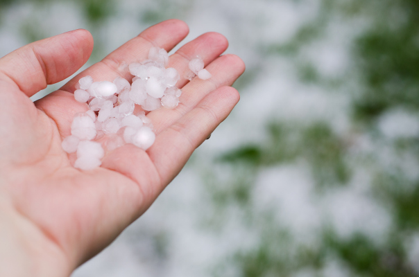 Person with open hand holding hail